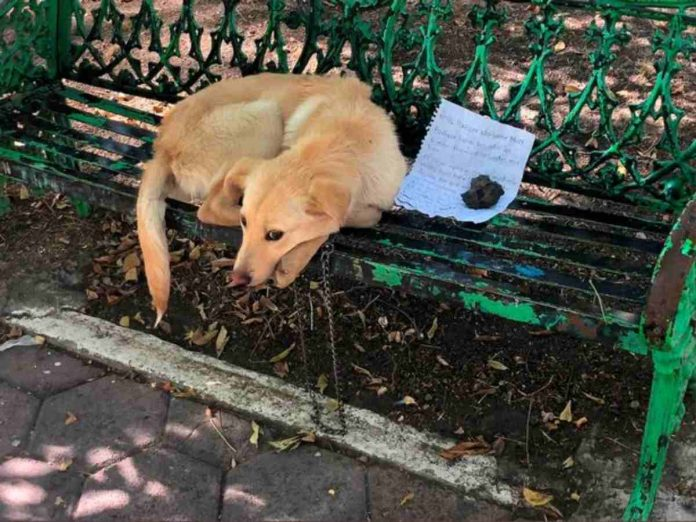 """Cane abbandonato su una panchina, la lettera del bambino spezza il cuore: """"I miei parenti lo picchiavano"""""""
