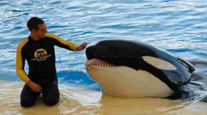 L'addestratore alexis martinez e l'orca keto che lo ha ucciso