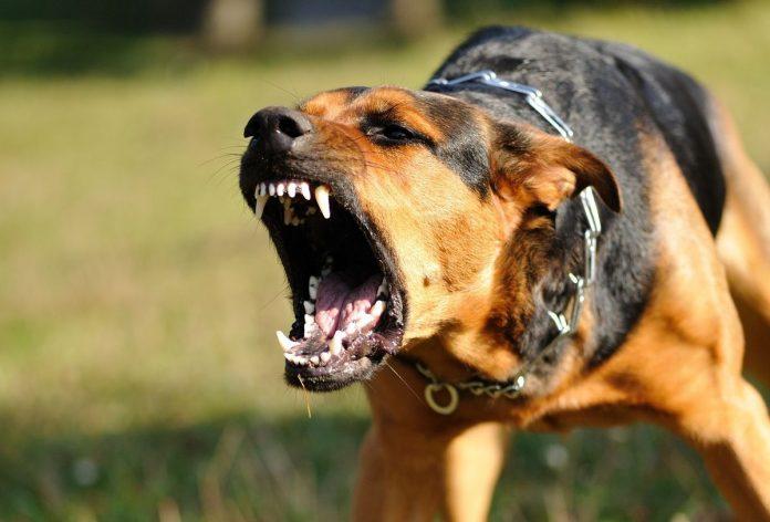 cane aggressione genitali