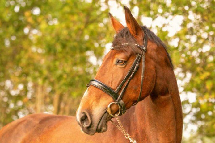 cavallo morde naso