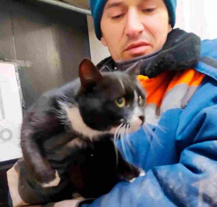 Gatto salvato in Russia diventa viceministro protezione animali