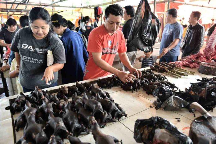 mercato indonesia pipistrello covid