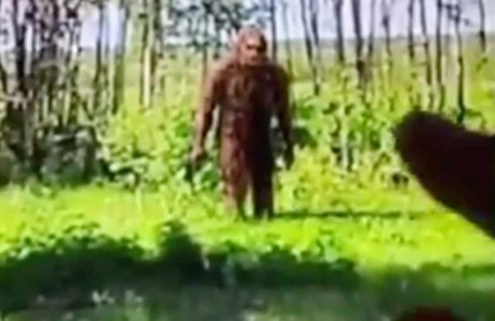 "Bigfoot avvistato su Google Earth, il video del ""ritrovamento"" diventa virale"