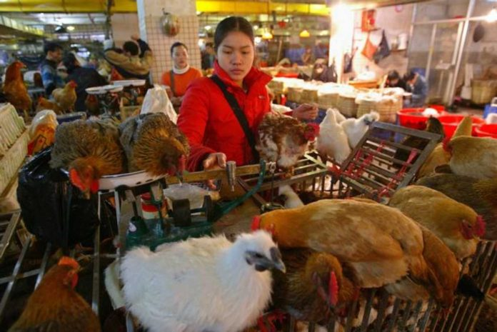 mercati umidi pandemia