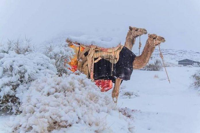 Neve deserto segno fine del mondo isaia profezia