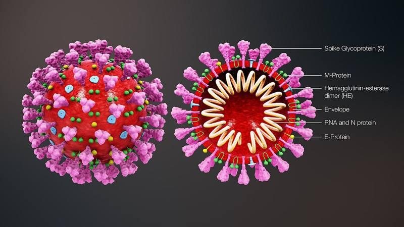 proteina spike coronavirus