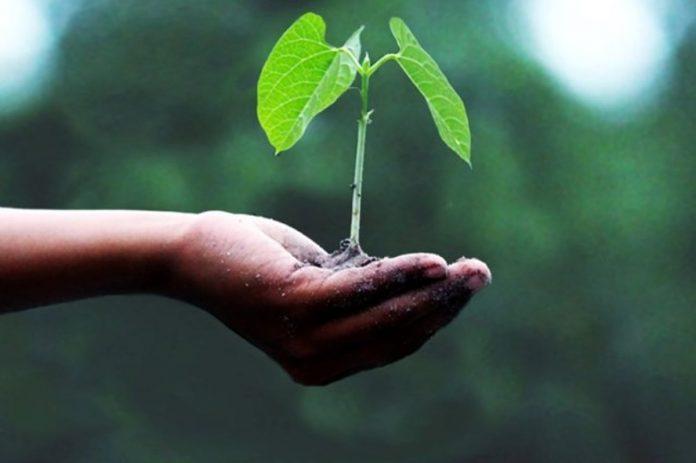 cos'è il ministero della transizione ecologica