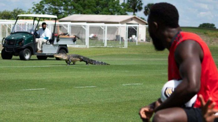 alligatore toronto mls