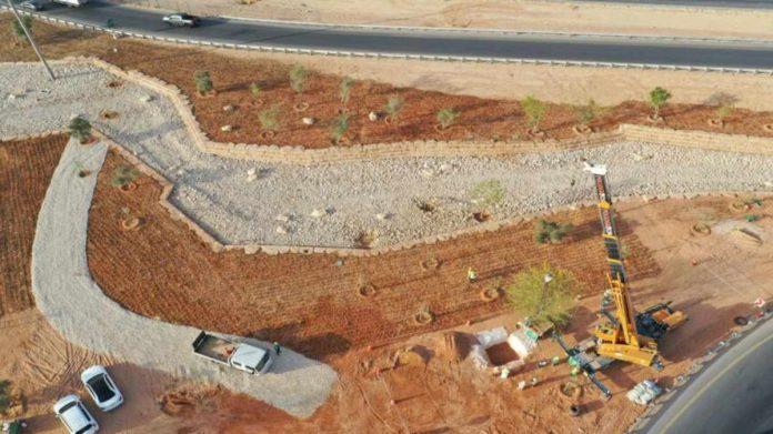 alberi piantati arabia saudita deserto