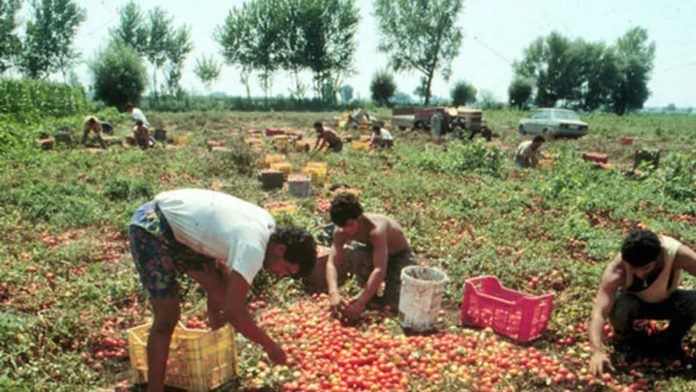 Braccianti agricoli