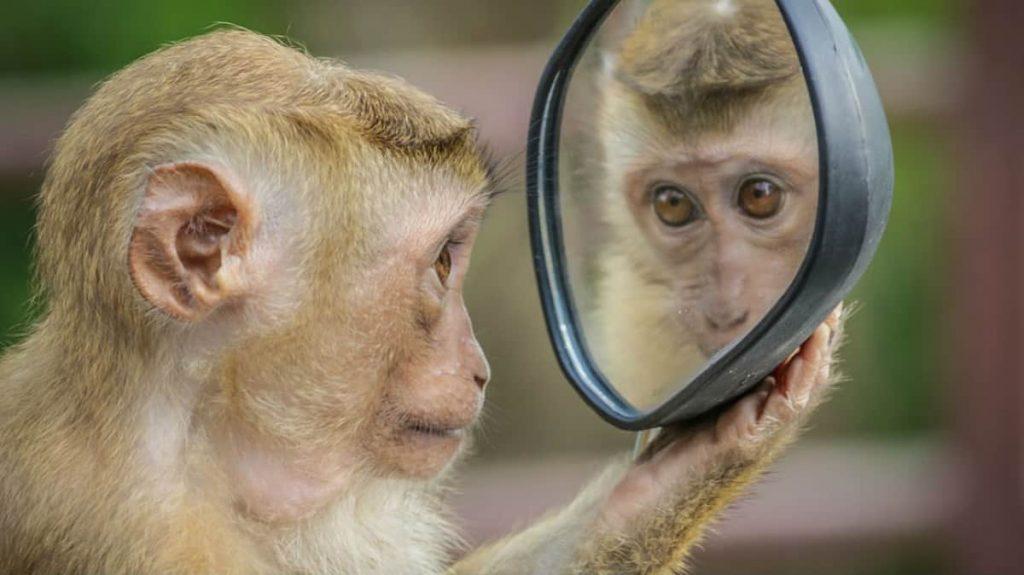 intelligenza animali