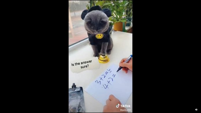 gattino risolve addizioni