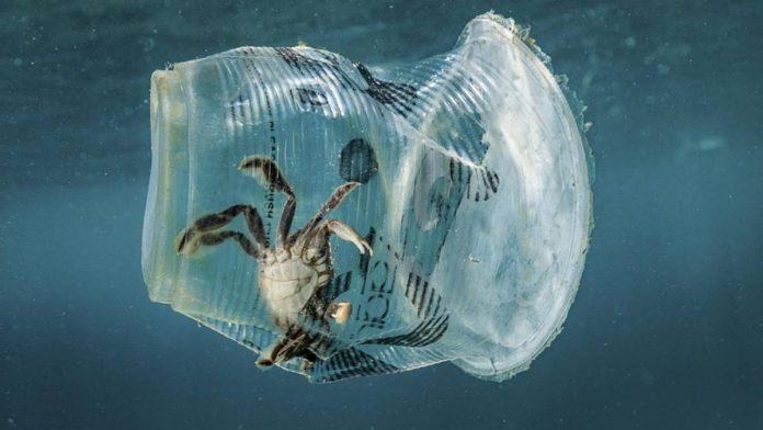 Plastica monouso in mare