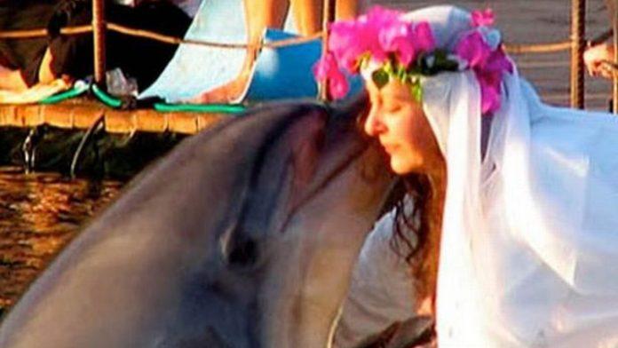 Matrimonio delfino