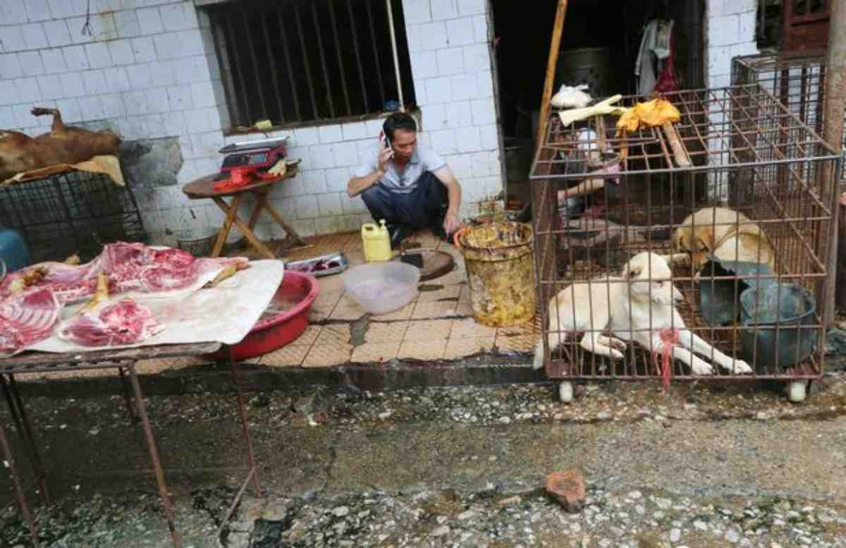 cani mercati umidi gatti