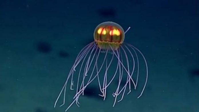 medusa criniera fossa marianne