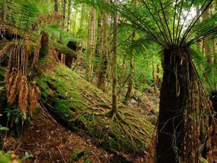 Australia foresta