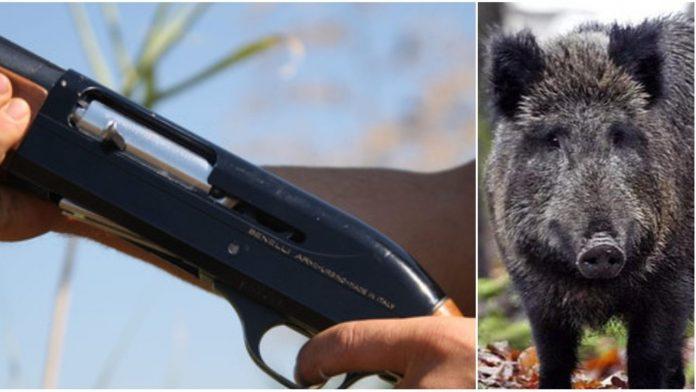 cinghiale uccide cacciatore