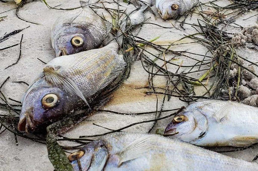 Pesci morti Missouri